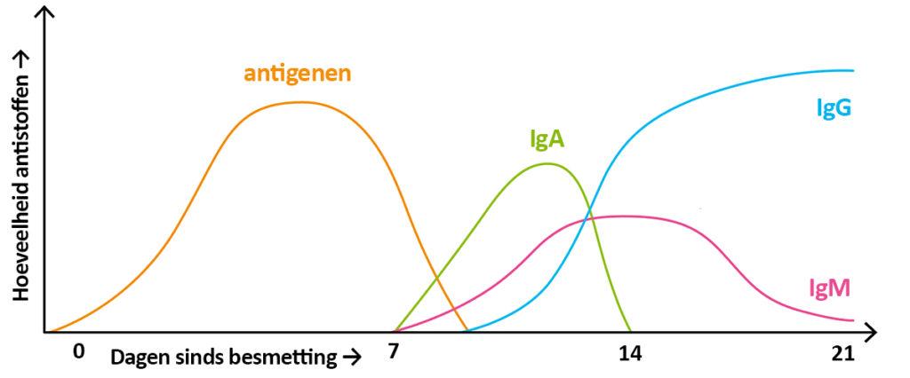 corona antistoffen waarden grafiek